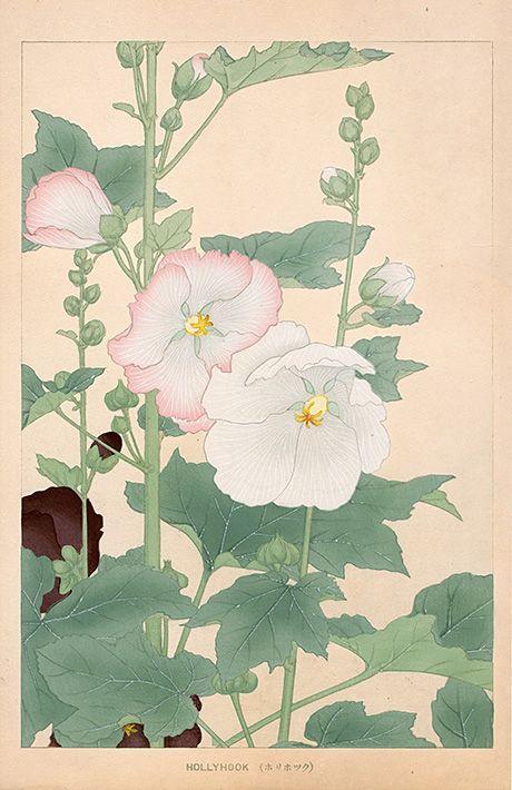 Chigusa звуковые Цветы Японии гравюры 1900