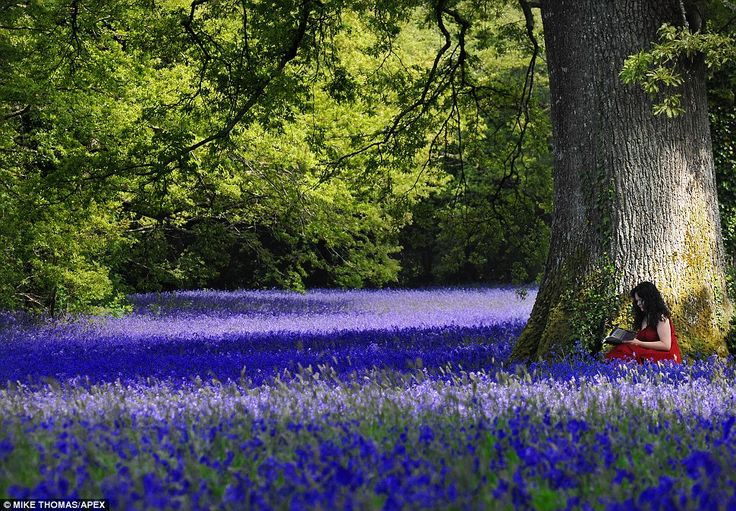 Bluebells in Enys Gardens, near Falmouth, Cornwall. What a magical place for a book lover.