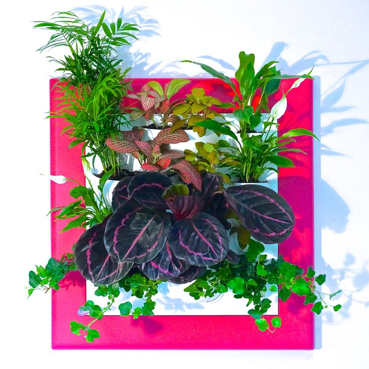 Фитокартины Flowall | фитостены | фитомодули #vertical_garden #greenwall #livingwall #Green_Wall #minigarden #фитокартины #фитостены #Flowall  #Garden_Decorating #Garden_ideas  #Best_Gardening