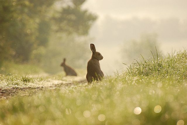 Rabbits always think that if they don't move no one can see them.  They're invisible.  Hope the photography took this photo back there and showed them they're not invisible.  Rabbits really need to learn that they show.