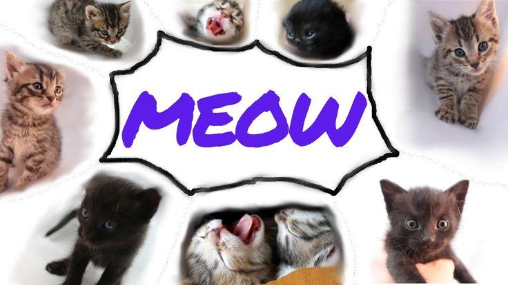 Tiny Kittens - Big MEOW - FelixBcats
