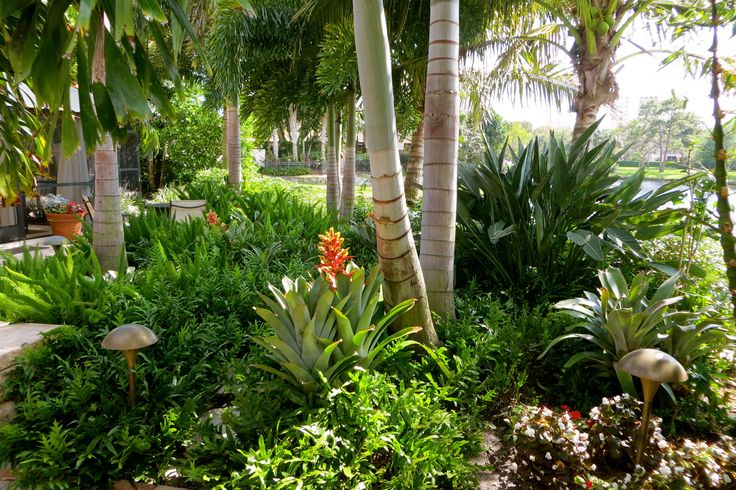 Florida landscapeLandscapes Ideas, Landscapes Florida, Florida Yards, Florida Landscapes, Front Yards, Backyards Beautification, Club House, Backyards Inspiration, Tropical Backyards