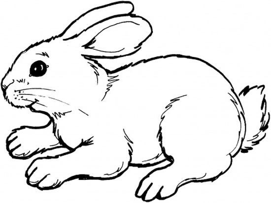 bunny rabbits Colouring Pages