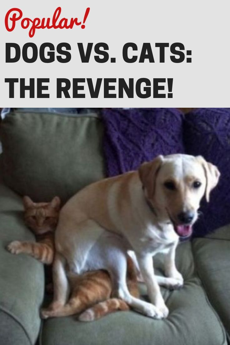 Dogs Vs Cats The Revenge With Images Cat Vs Dog Dogs