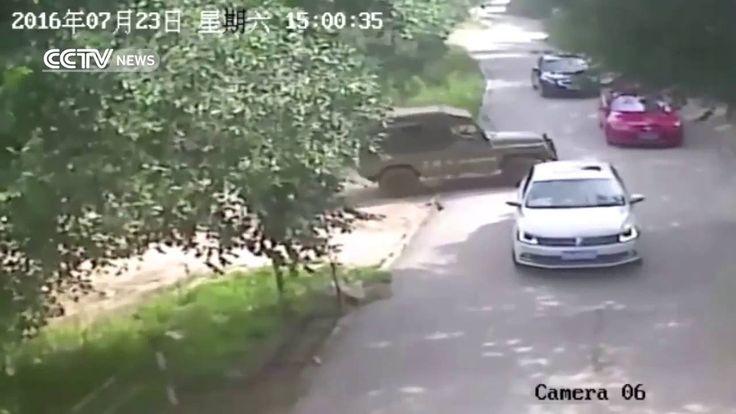 Τίγρης σκότωσε γυναίκα στο Πεκίνο ~ Ardan News