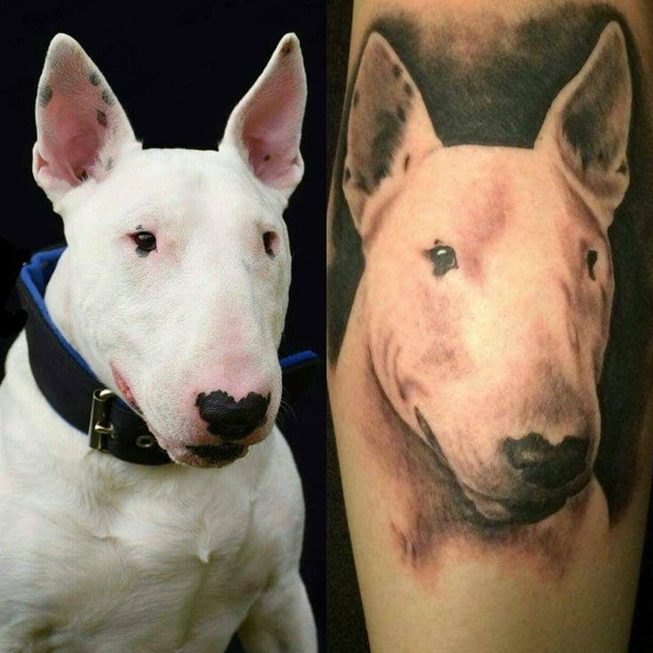 26 best bullterrier tattoos images on pinterest english bull terriers bull terrier tattoo. Black Bedroom Furniture Sets. Home Design Ideas