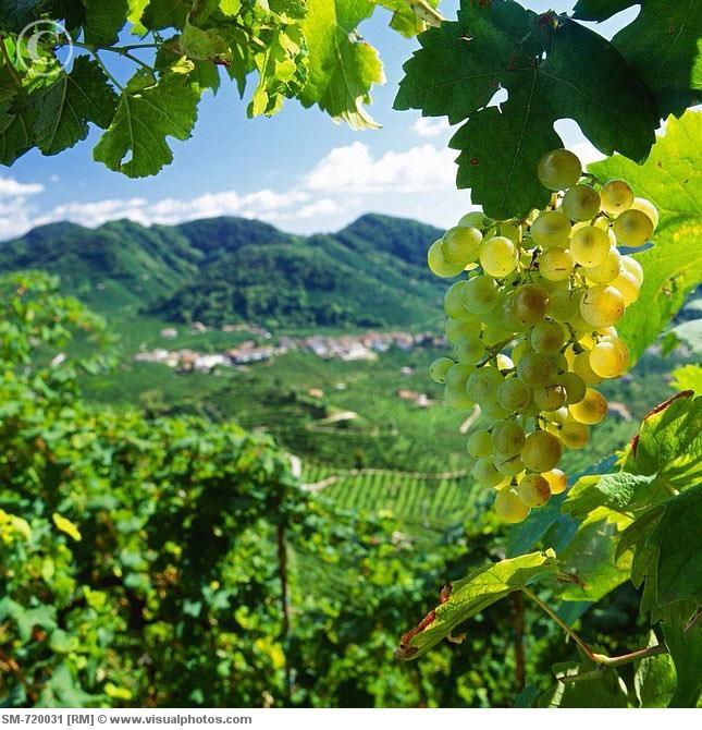 Valdobbiadene, Italy: Prosecco Country