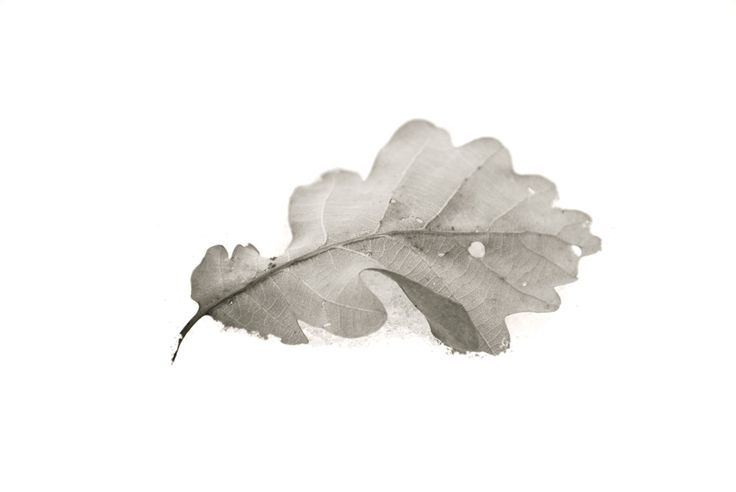 """In memory of Grandpa Jer.   """"Most of all, he did not know that there, asleep in the tree and the ground, were already plans for new leaves in the Spring."""""""