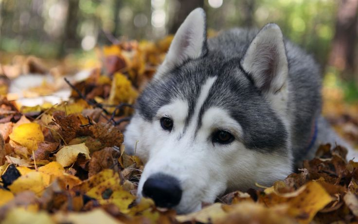 Download Autumn Animals Images Wallpaper 1920x1200 | Full HD ...