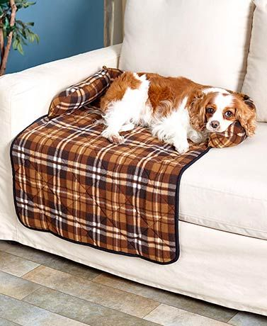 Best 20 Pet Couch Cover Ideas On Pinterest Sofa