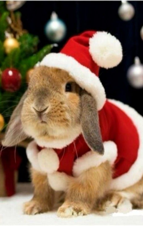 Santa bunny... looks like my Thumper ❤️