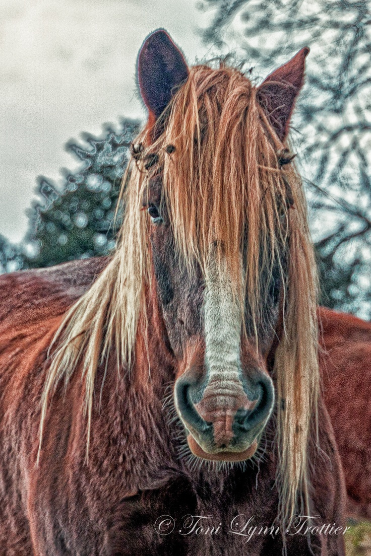 Hey. Or should I say Hay? Can you recommend a good hairdresser? Or should I say, horsedresser?