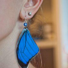 Boucles d'oreilles faite de véritables ailes de papillons bleu ( morpho bleu )