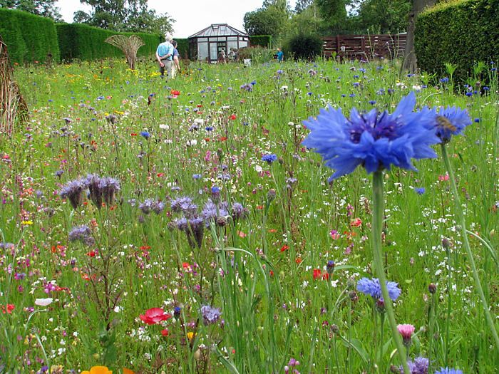 Native meadows natural landscaping jardines for Wild grass landscaping