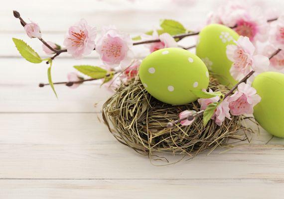 A legcukibb nyuszis és virágos háttérképek: válassz most ingyen letölthető tavaszi képeink közül!