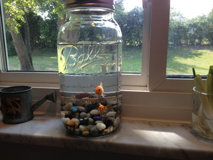 My Half Gallon Mason Jar Goldfish Bowl