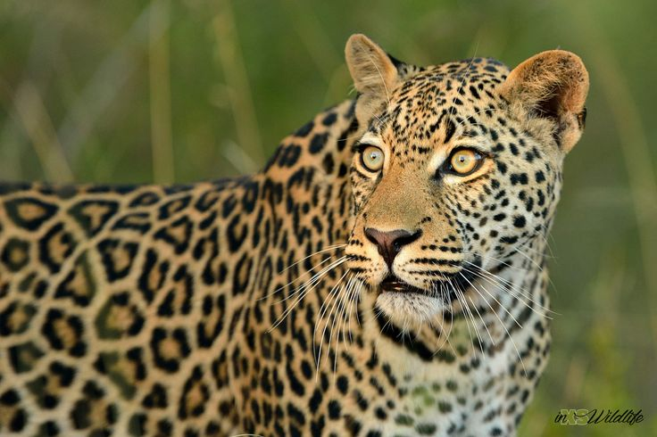 We're all about wildlife.... photography, safaris, prints, products, designs, etc.  Please email requests to inxswildlife@gmail.com
