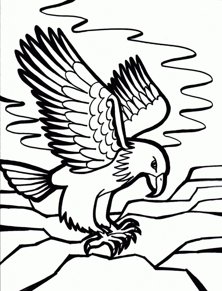Beautiful Eagle Coloring Book 25 This section has a
