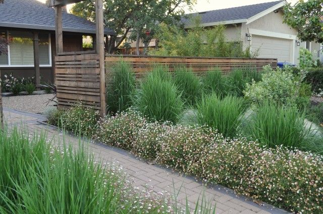 No mow yard ornamental grasses perennial wood fence for Ornamental grass front yard