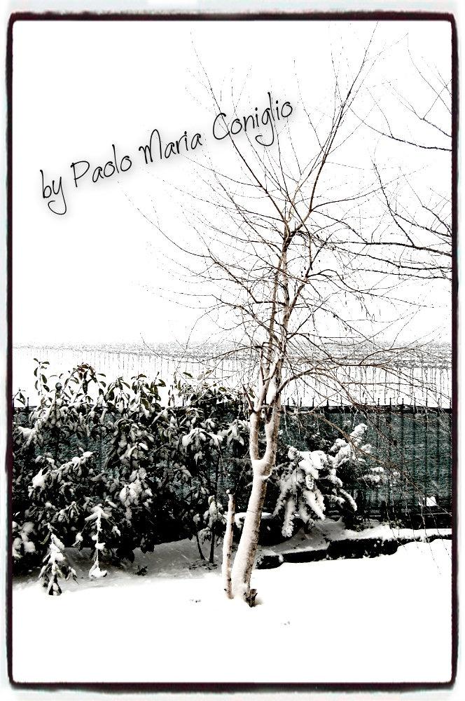 La mia Betulla con la Neve, inverno 2012