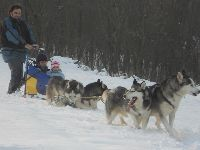 Help with huskies near Vienna. - workaway.info