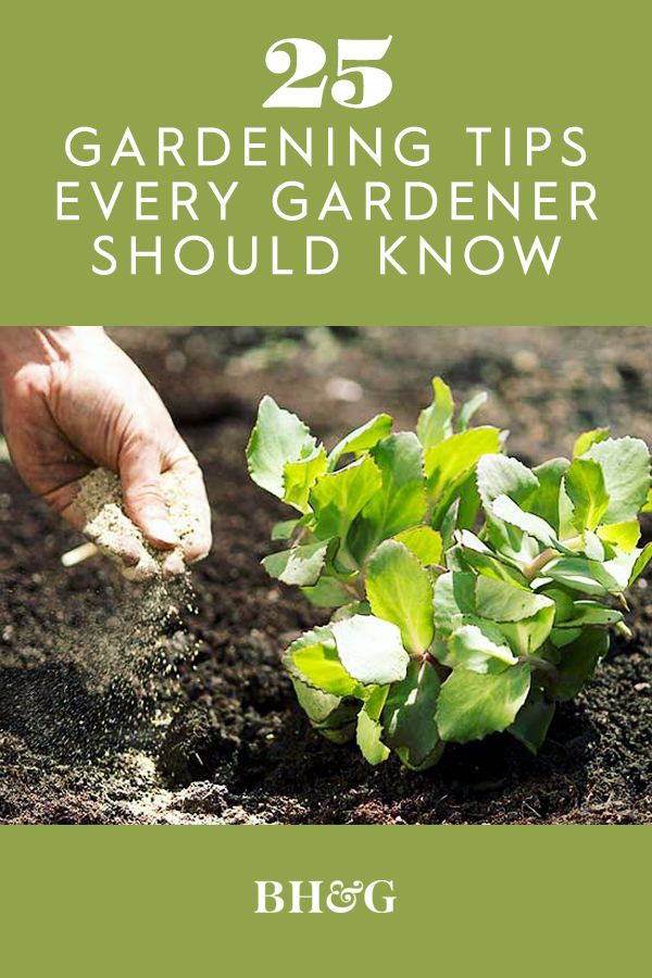 25 Gardening Tips You Ll Wish You D Known Sooner Organic