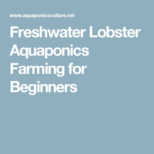 Freshwater Lobster Aquaponics Farming for Beginners