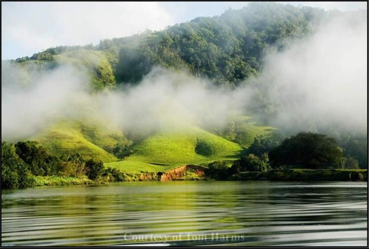 Daintree, Australia. Can't wait to zip line through that rainforest!