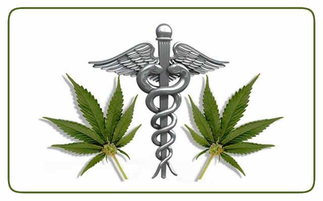 LEGALIZADA MACONHA PARA USO MEDICINAL - Decisão da Justiça Federal do DF deu prazo de dez dias para a Agência de Vigilância Sanitária, que regula os medicamentos no país, retirar o THC da lista negra das substâncias proibidas.