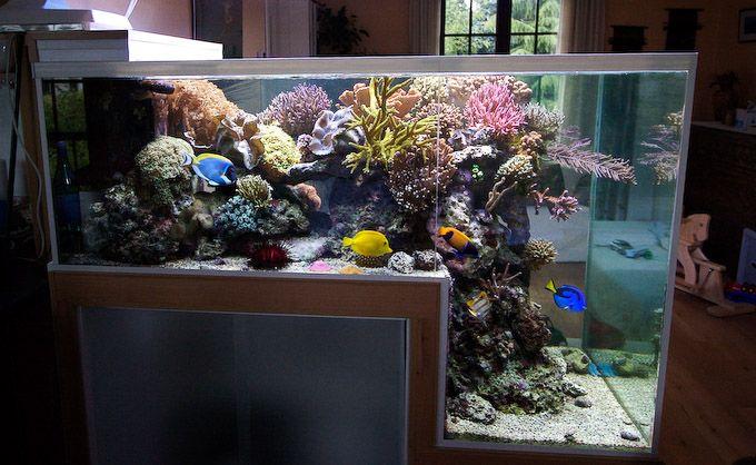 #TankEnvy: Belgian marine biologist/reef hobbyist Philippe Grosjean's 660-liter drop off aquarium. (via Reef Builders)