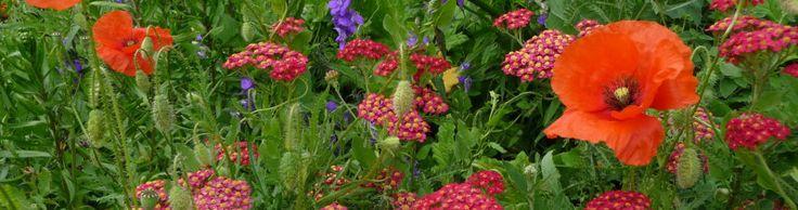 112 best jardinage abeilles et compagnie images on pinterest vegetable garden organic. Black Bedroom Furniture Sets. Home Design Ideas