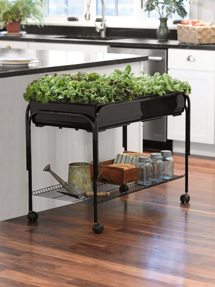 Mobile Salad Garden for Indoor Gardening