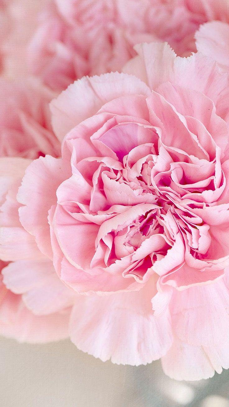 Cute Preppy Deskstop Wallpapers 5 Cute Pink Peonies Iphone Wallpapers Peon 237 As Rosas