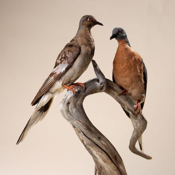 Исчезнувшие птицы фото