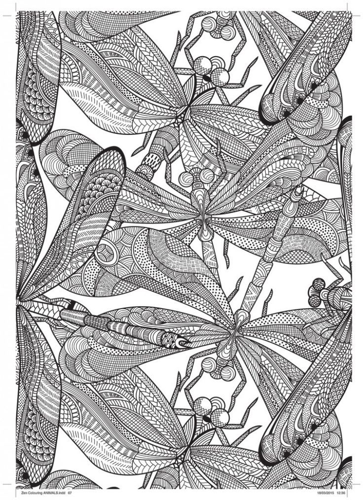 Dragonfly Free Pattern Download Printable Adult Coloring