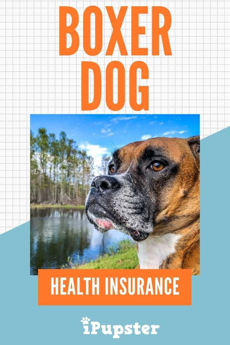 Pet Insurance For Boxer Dogs Is It Worth The Cost With Images