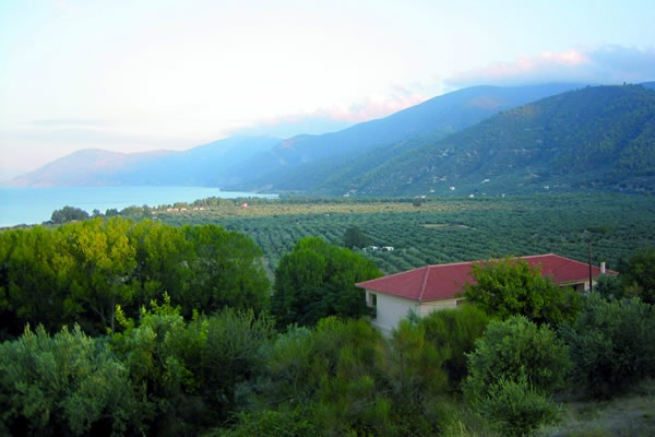 Rovies Grove on Evia - this is where the very best Greek olives come from