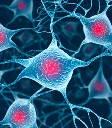 Serotonin Helps Control Body Temperature and Breathing
