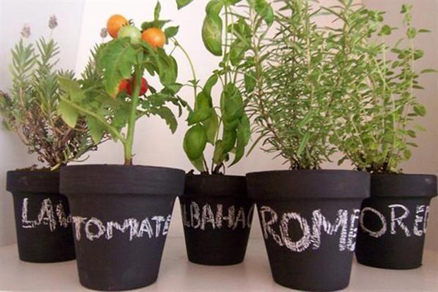 Un experto te recomienda las mejores especies para cultivar en macetas; tomá nota