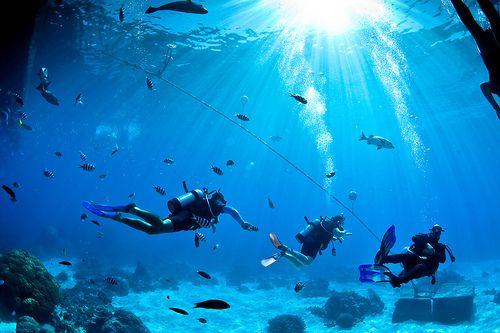 Jaaaaaa.... ik wil dit jaar dolgraag weer duiken, de gewichtloosheid voelen waar ik zo van hou!