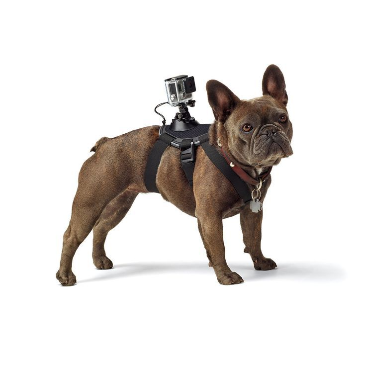 Ever wonder what it feels like to catch a Frisbee in your mouth? Strap an action cam onto your dog's back and experience life through canine eyes.