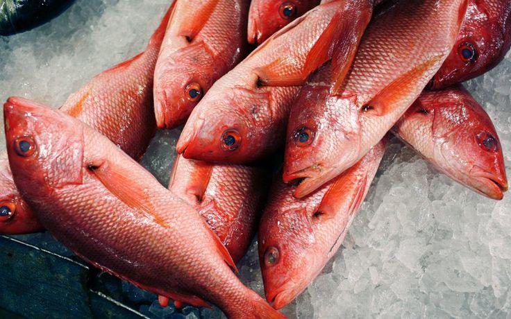 Belastung durch Umweltgifte: Guter Fisch, schlechter Fisch - SPIEGEL ONLINE
