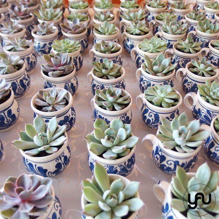 Marturii nunta plante suculente | YaU Concept BLOG