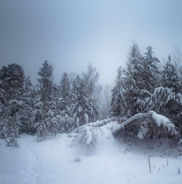 Snow Silence