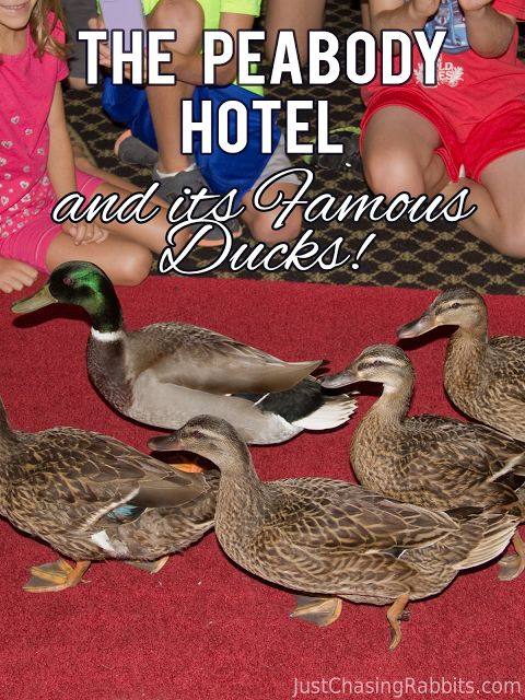 A Stay at the Peabody Hotel in Memphis, Tennessee (and Seeing the Famous Ducks!) | Just Chasing Rabbits