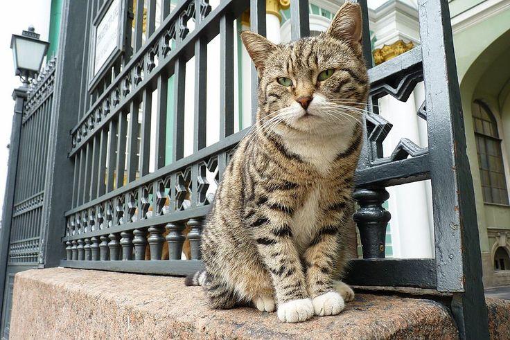 Эрмитажные коты или «Мяу» особого назначения. Обсуждение на LiveInternet - Российский Сервис Онлайн-Дневников