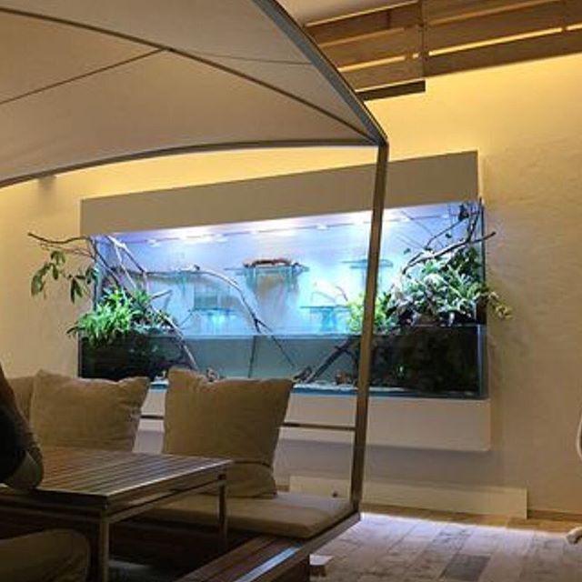 【cotup】さんのInstagramをピンしています。 《Large Terarium Tank 3000x380x450/1200H エーピーエヌ様  #海水魚 #ガラス水槽 #オーダーメイド #オーバーフロー #amp #アクアリウム #水草 #水槽 #インテリア #大型水槽  #水草レイアウト #水族館 #コットアップ #水景水槽 #海水魚水槽 #水草水槽 #レイアウト水槽  #熱帯魚 #水景 #テラリウム #ビバリウム #bizarreplants》