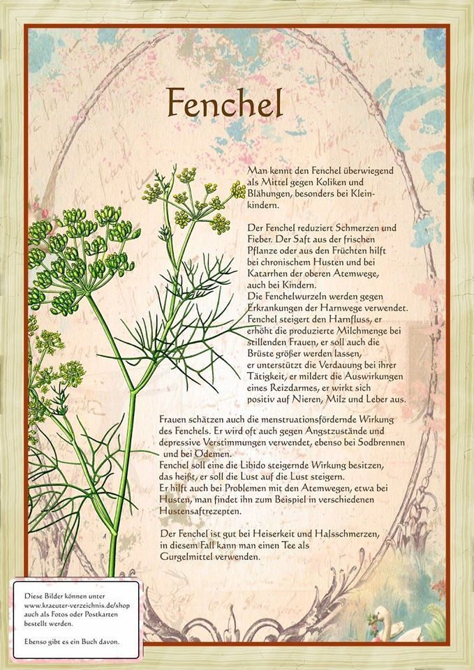 Fenchel http://www.kraeuter-verzeichnis.de/
