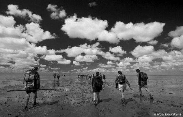 Wadlopen - foto gemaakt in Friesland, Nederland