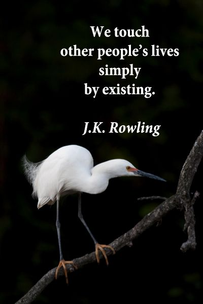 """We touch other people's lives simply by existing.""  J.K. Rowling – On image of snowy egret in Florida by Florence McGinn -- Explore tips and quotes on writing inspiration at http://www.examiner.com/article/writing-inspiration-from-water-and-nature-tips-and-quotes"
